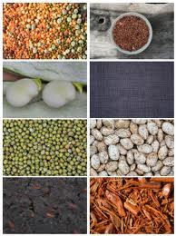 A selection of legumes
