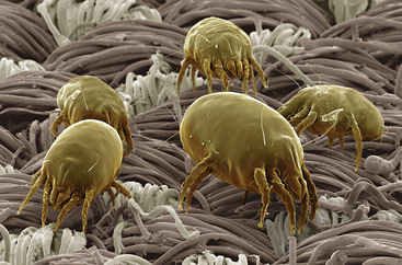 A group of dust mites